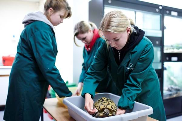 Three students working with a tortoise