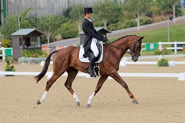 Image for Fox-Pitt shows Olympic pedigree with leading dressage score