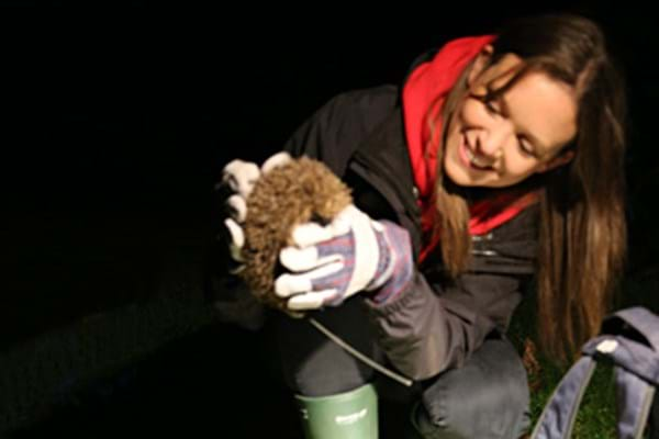 Image for It takes a hardy Hartpury hedgehog to survive hibernation! Lecturer Lucy plays leading role in prickly project