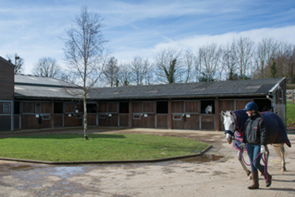 Image for With rave reviews and the best possible care, Hartpury is the best place to send your horse on a working holiday!