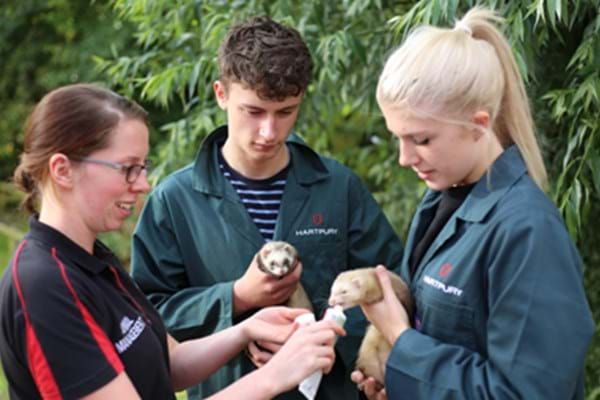 Image for Hartpury gives homeless hamster and forsaken ferrets a place to rest their paws