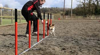 Hartpury students jump at the chance to support national dog agility show