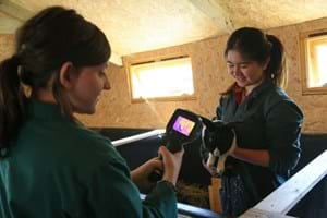 Students using a thermal imaging camera to check a rabbit at Hartpury