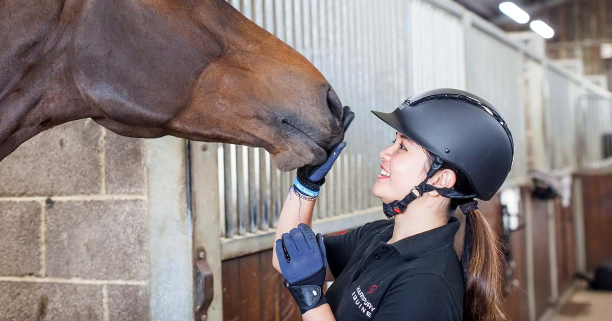 Equine Degrees At World Class Facilities University