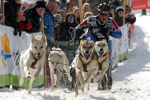 Image for Hartpury University student Vickie Pullin sets her sights on sled dogs world title