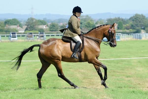 Image for Champion racehorses are heading  to RoR Showcase at Hartpury