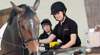 New equine degree is launched at Hartpury