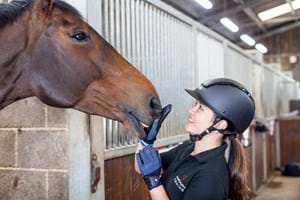 Student patting a horse's nose on Hartpury yard