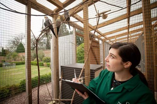 Student in Aviary