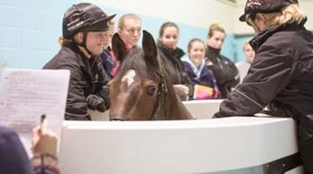 Hartpury contributes to new equine guidelines over use of water treadmills