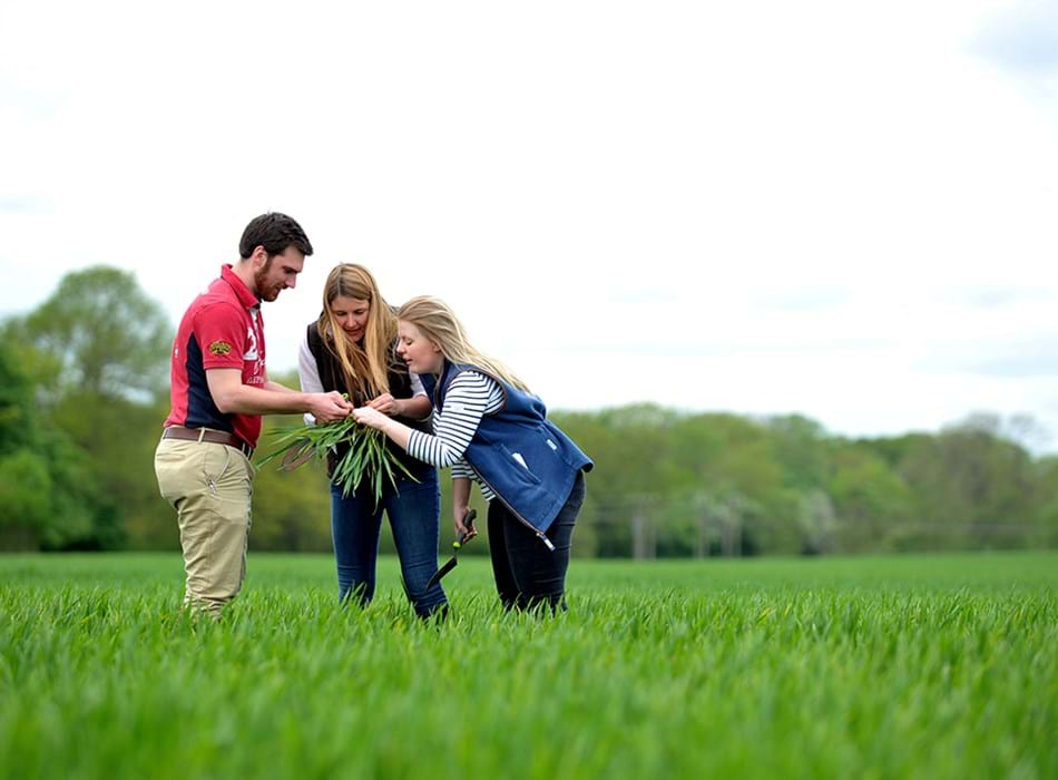 Three agriculture students in a field studying the crops