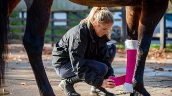 Image for New equine diploma is launched at Hartpury