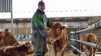 New herd of pedigree cattle will bring research benefits to students