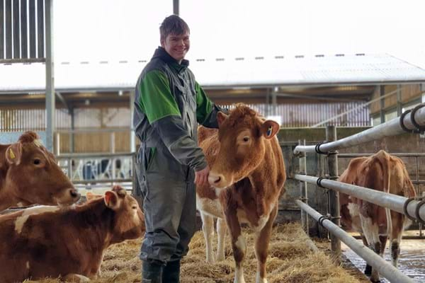Image for New herd of pedigree cattle will bring research benefits to students