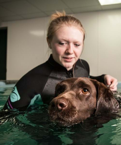 Dog in canine hydrotherapy pool